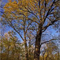 Два дуба в старом парке, Горняцкое
