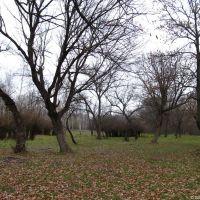 В старовинному харінському парку, 2012, Горняцкое