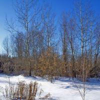 Зимний лес. Wintry Forest, Демурино