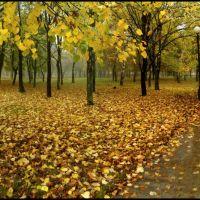 После дождя, Желтые Воды