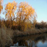 Поздняя осень на реке Сура, Зализничное