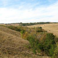 Природа у села Зеленое (3). Осень 2010, Зеленое