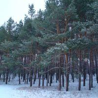 Лес, Зеленое