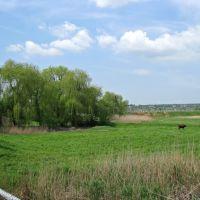 Вид с моста, Кринички