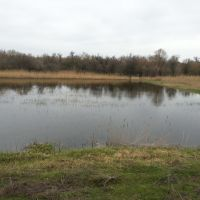 Сезонный водоем с утками, Марганец