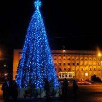 Городская елка, Никополь