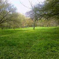 первомайский парк, Павлоград