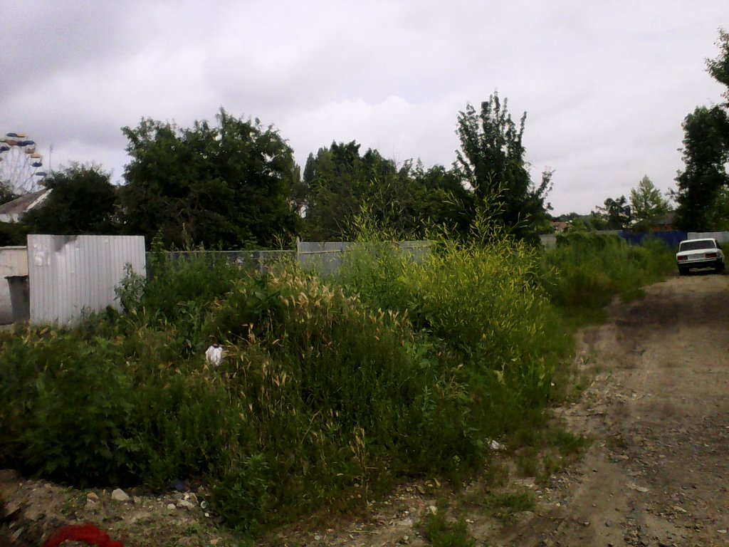 якобы покосили траву две недели назад.Угол улиц Комсомольская и Венеры Павленко , Кореновск