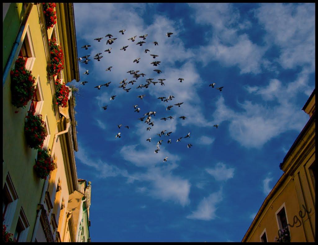 Und meine Seele spannte Weit ihre Flügel aus (Eichendorff)...{a.r.}, Пирна