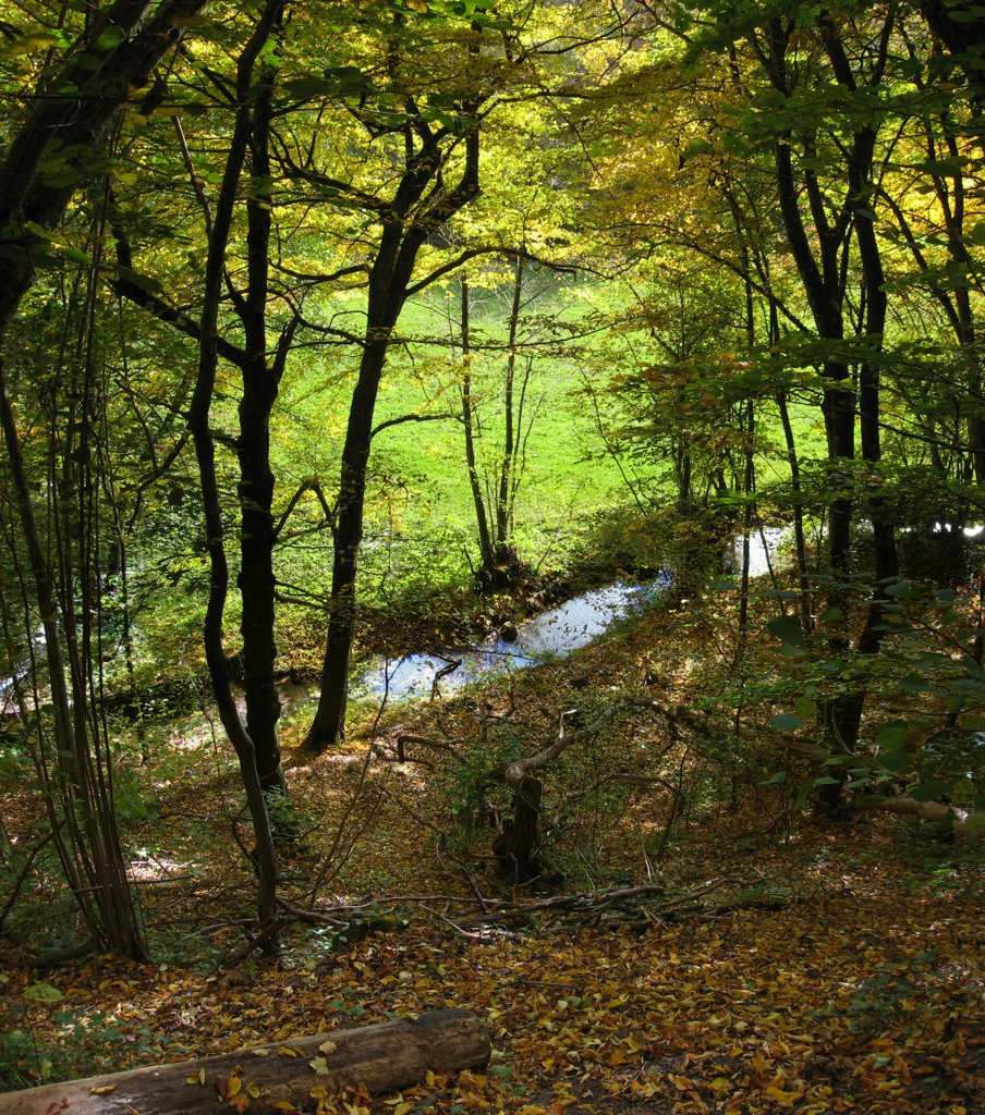 Blick vom Hauffsweg auf den Goldersbach, Фрейберг