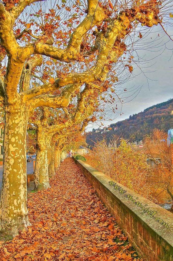 "#68 - ""Golden Autumn"", Heidelberg, Germany, Хейдельберг"