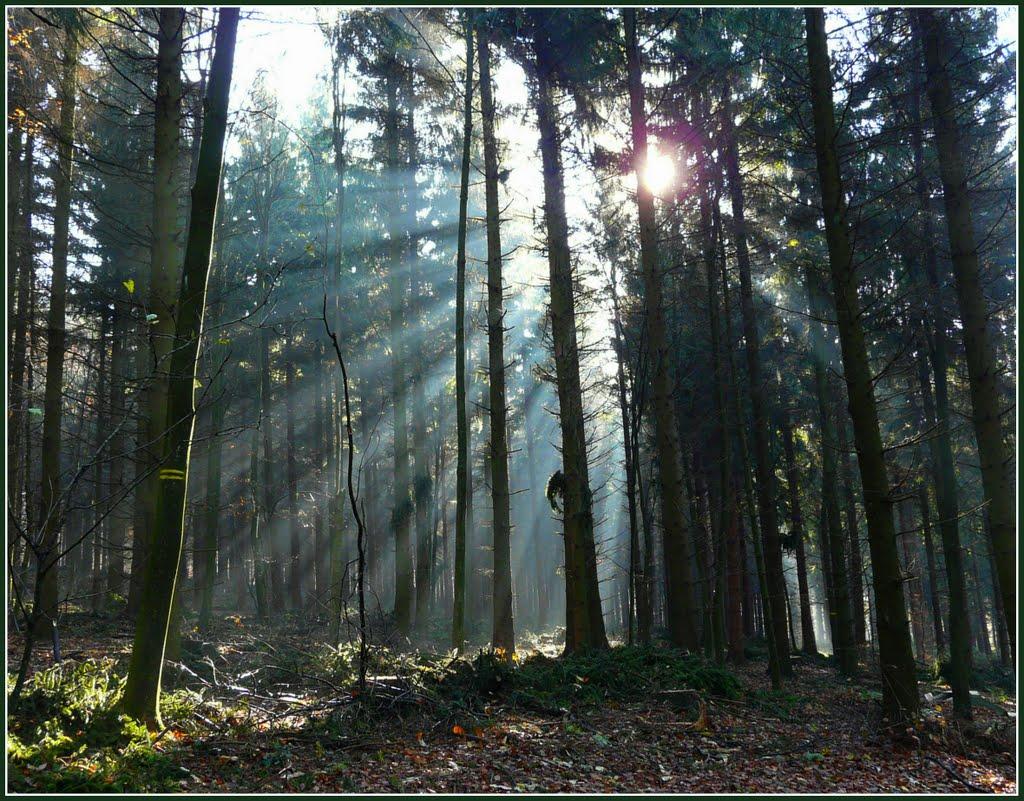 Sonnenstrahlen im Wald - Sunrays In The Forest, Хейдельберг