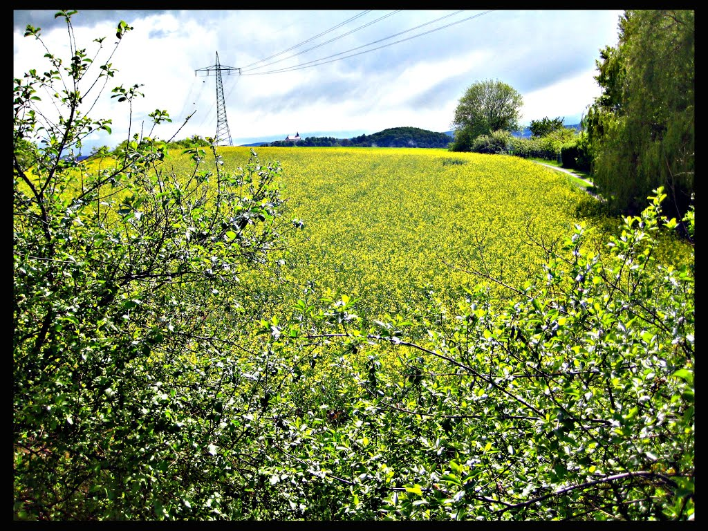 Greenery, Фульда