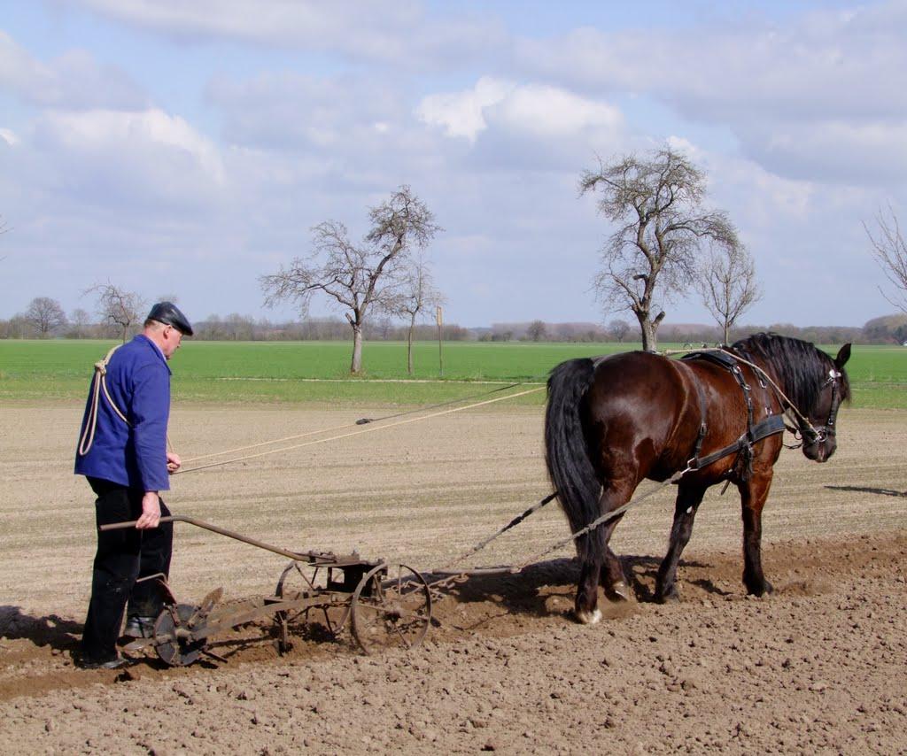 Feldbestellung in Altenbücken (landkreis Nienburg/Weser), Готтинген