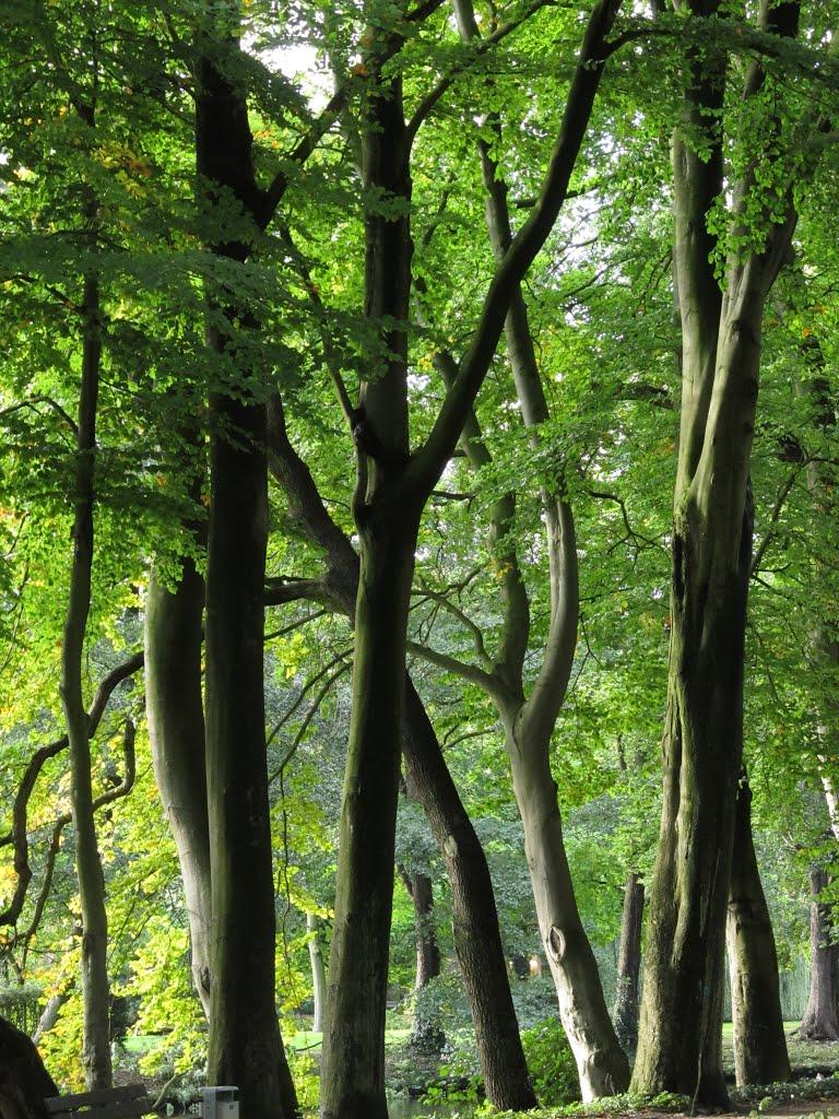 Bäume, Delmenhorst Burginsel, Дельменхорст