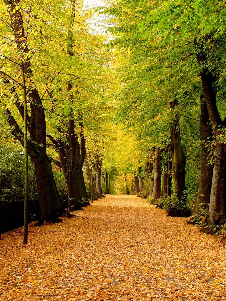 Herbst auf Lüneburgs Stadtmauer (2008), Лунебург
