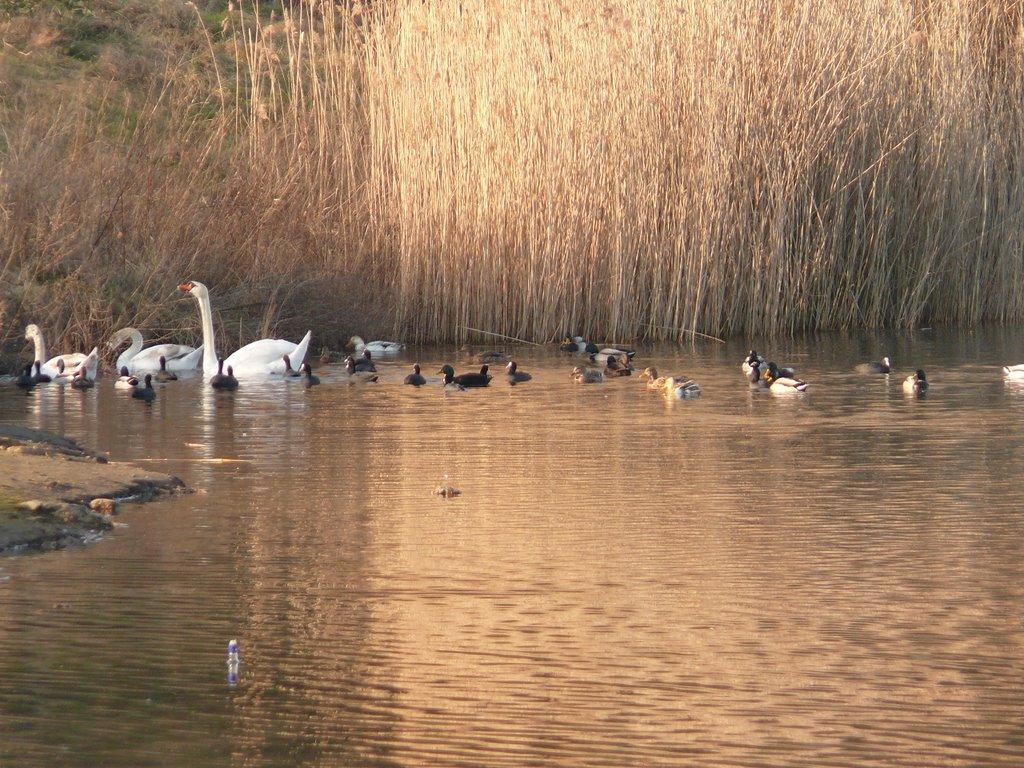 Lüneburg - Tierwelt am Kreidebergsee im Februar 2008, Лунебург