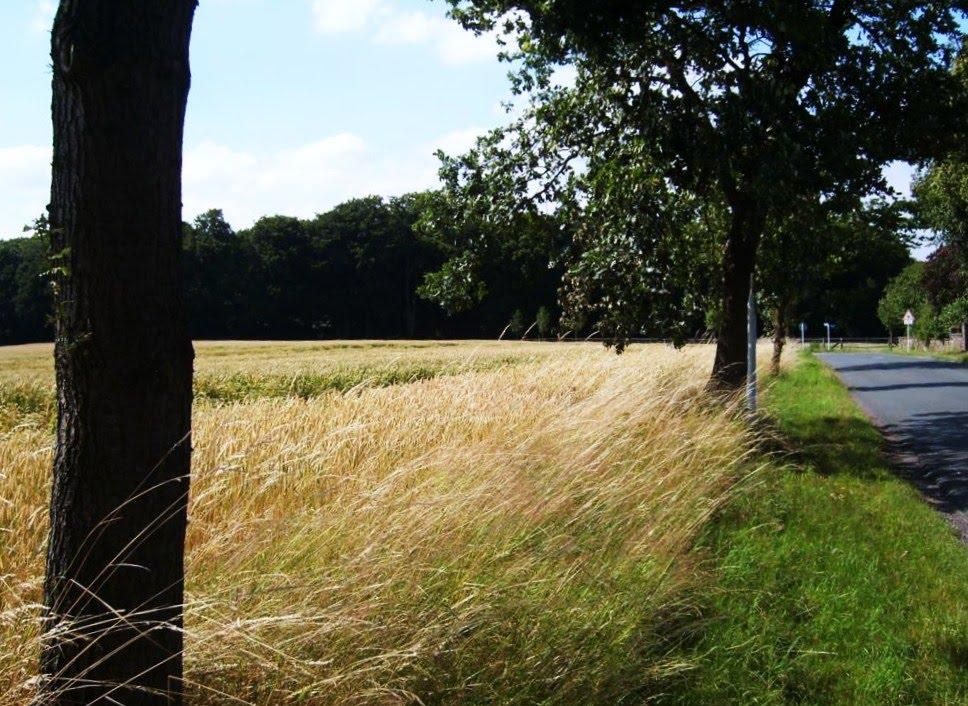 Ostberge im Sommer, Эскирхен