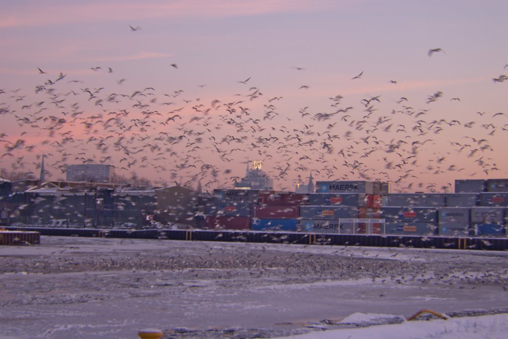 Seagulls @ Dortmund Harbor (Ruhr Metropolis) Skyline Harenberg Building, Florian + U-Tower, Дортмунд