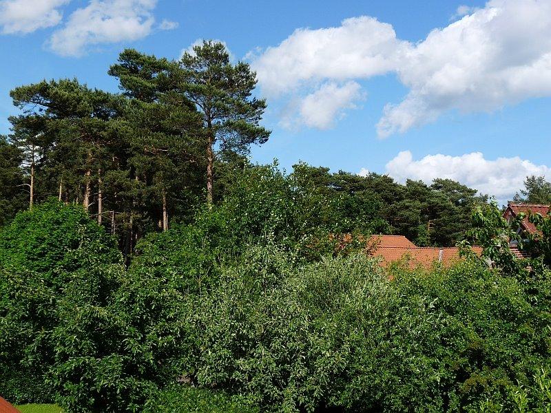 Naturpark Altenlingener Forst, Линген