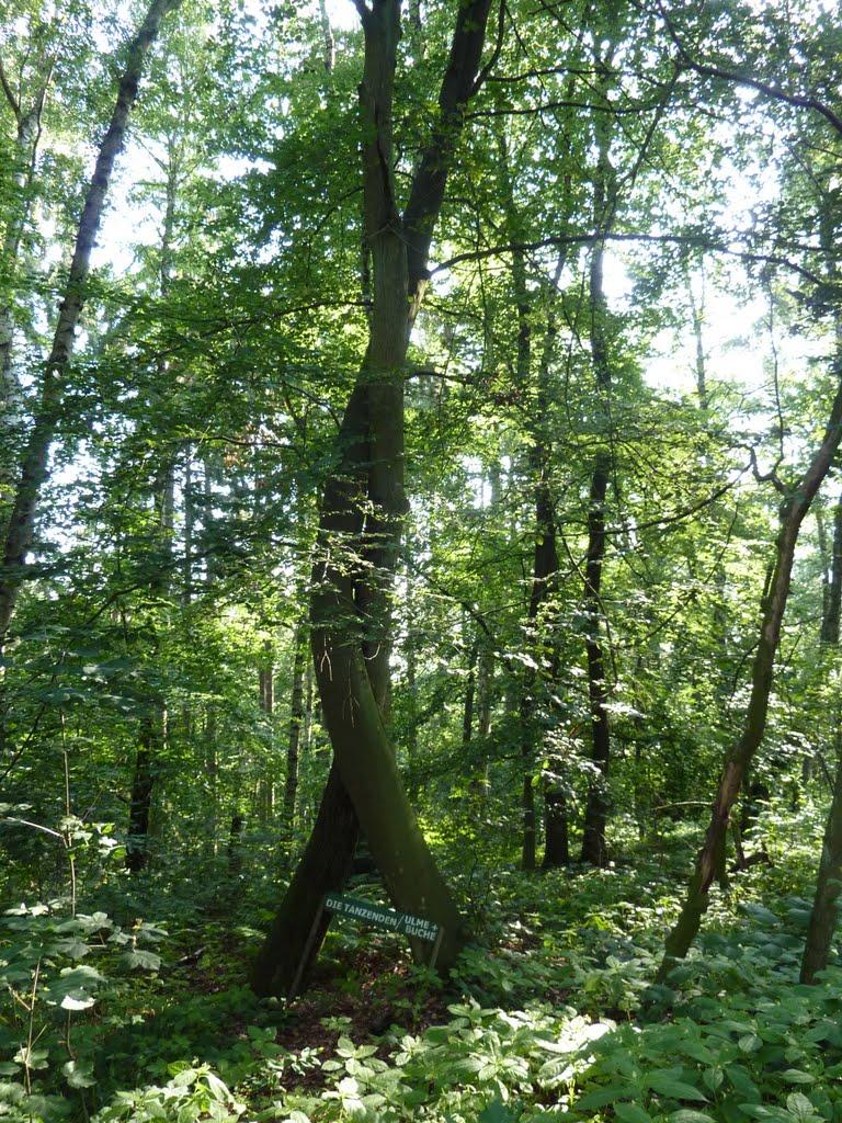 Tanzende Bäume in Teterow, Тетеров