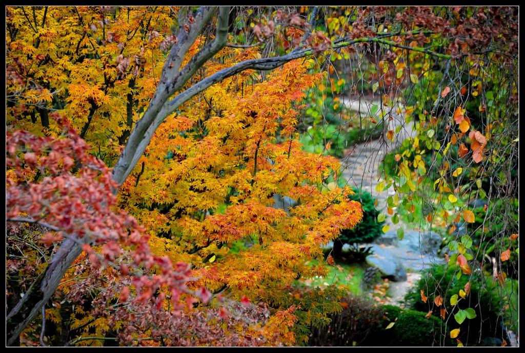 Dans les jardins du musée Albert Kahn, Нюилли-сюр-Сен