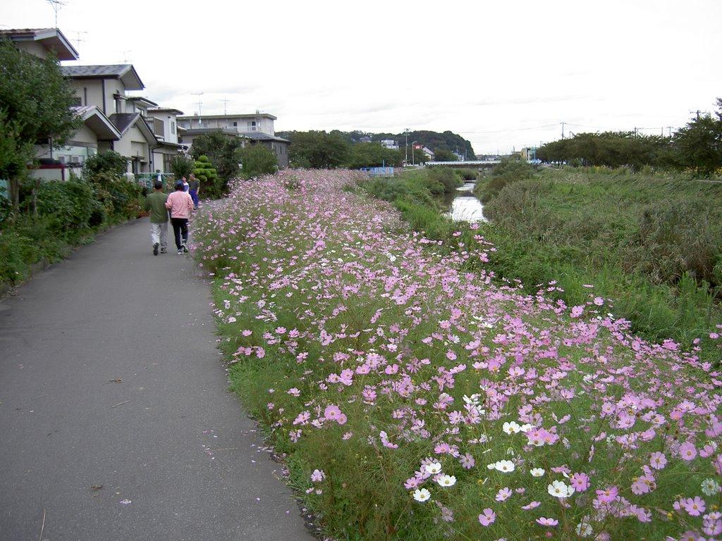 Cosmos Road, Иокот