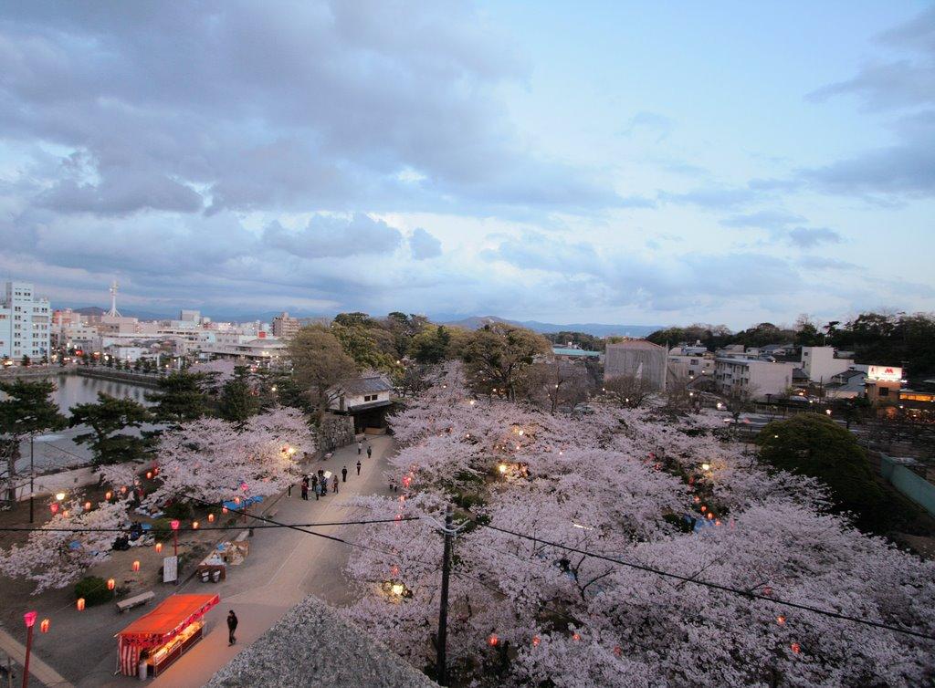 Cherry blossoms at Wakayama Castle 和歌山城の桜, Вакэйама