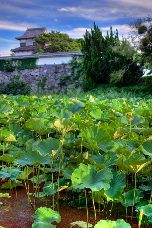 Lotus, Casle and the Clouds, Амаги