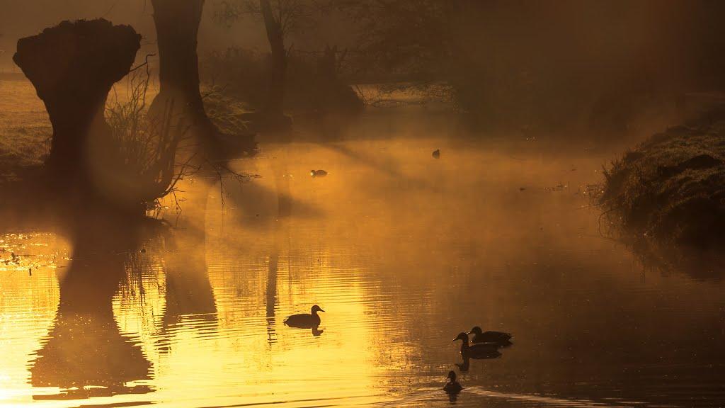 Morning Gold, Зейст