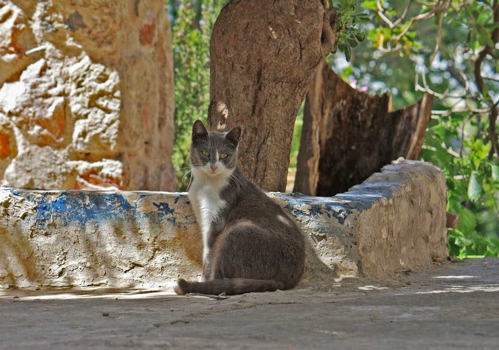 A  pose at noon, Афины