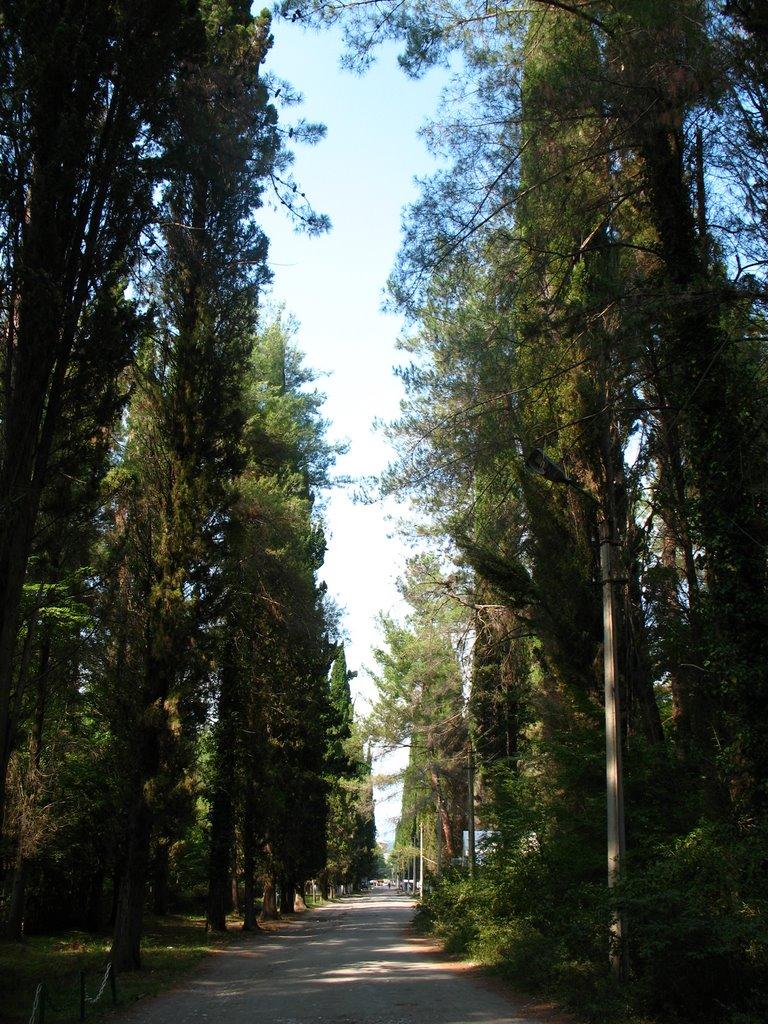 Парк в Пицунде, Пицунда