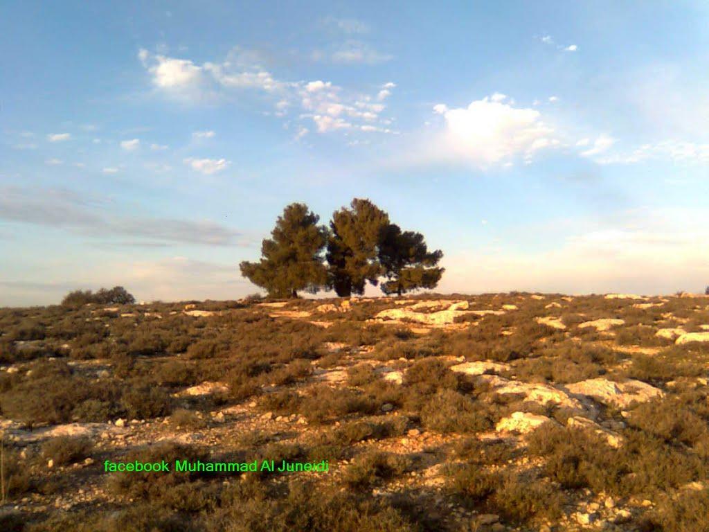 فلسطين المحتله / الخليل, Бээр-Шева