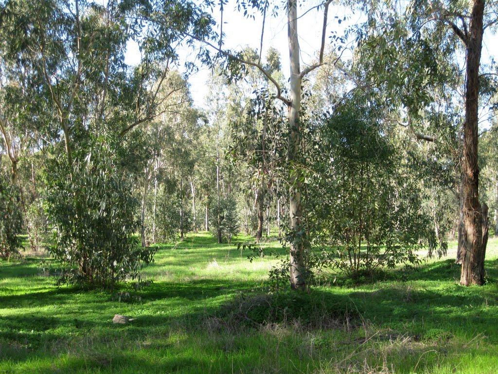 зимний лес, Натания