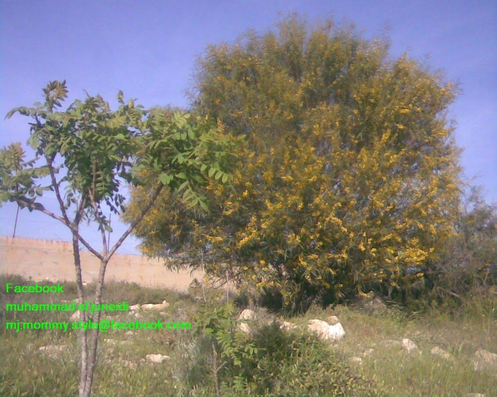 فلسطين الخليل فرش الهوى, Ришон-ЛеЦион