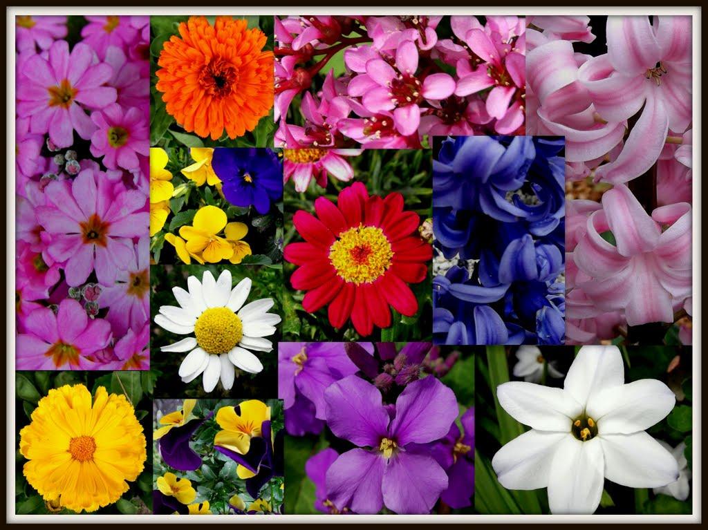 ☆HAPPY BIRTHDAY MILLA!!~Spring colors~☆, Бат-Ям