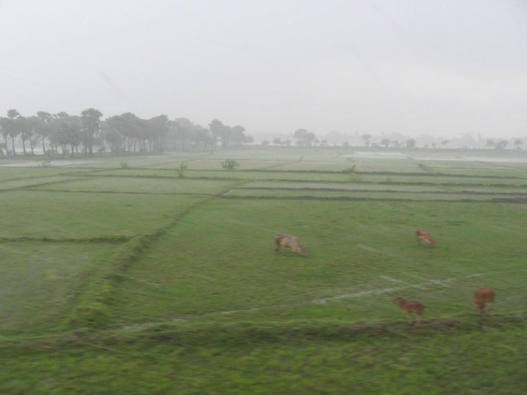 Downpour Blur, Бхатпара