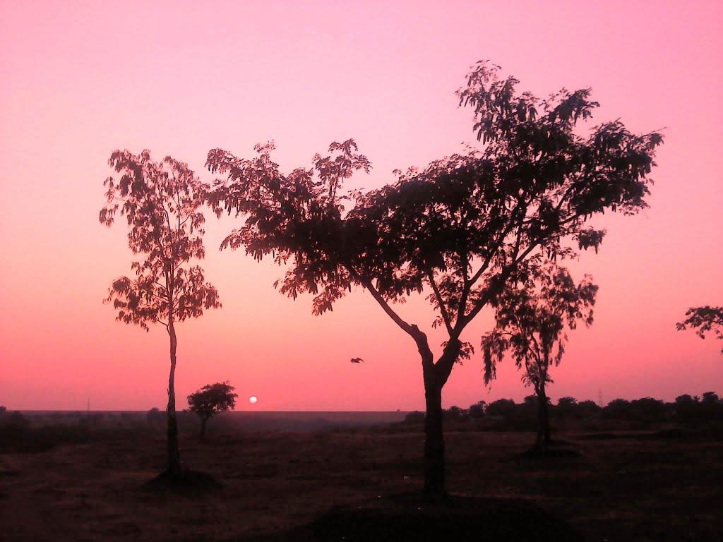 Tree, Кхамгаон