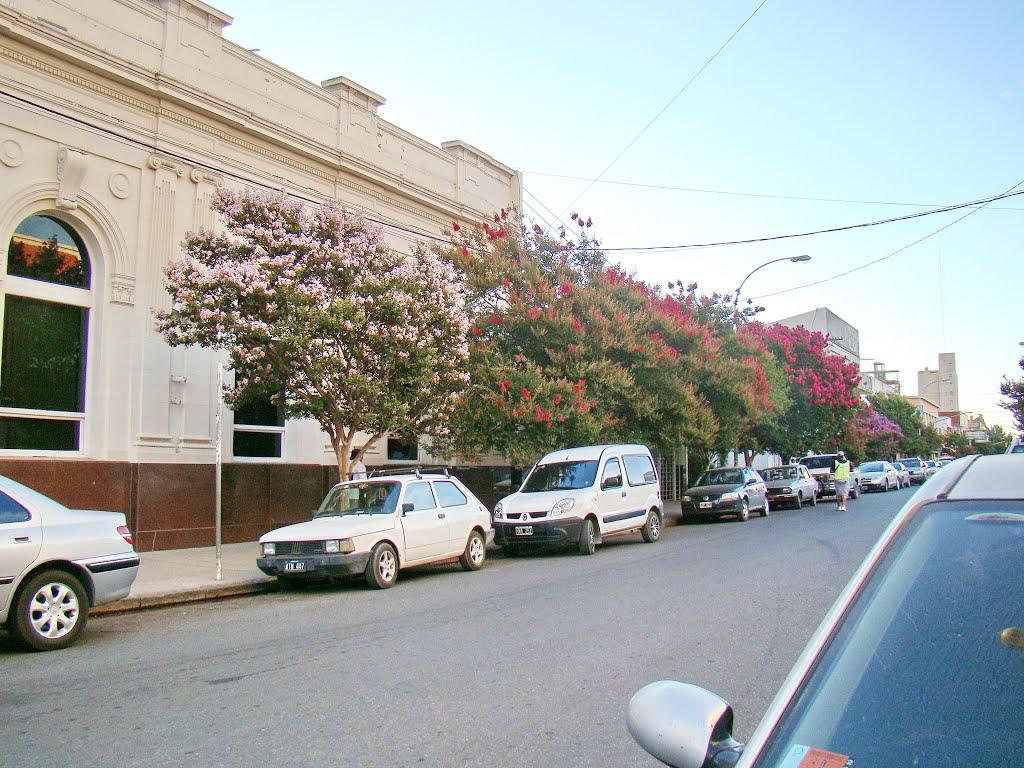 Necochea (Bs.As.) - Coloridos árboles frente a la sede bancaria en calle céntrica - ecm, Некочеа