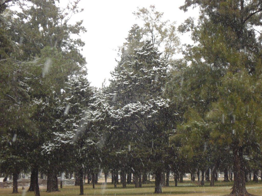 Nieve en el Parque Municipal de Pergamino, Пергамино