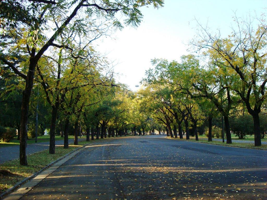 Acacias en Calle del Parque Independencia - Rosario - Santa Fe - Argentina, Росарио