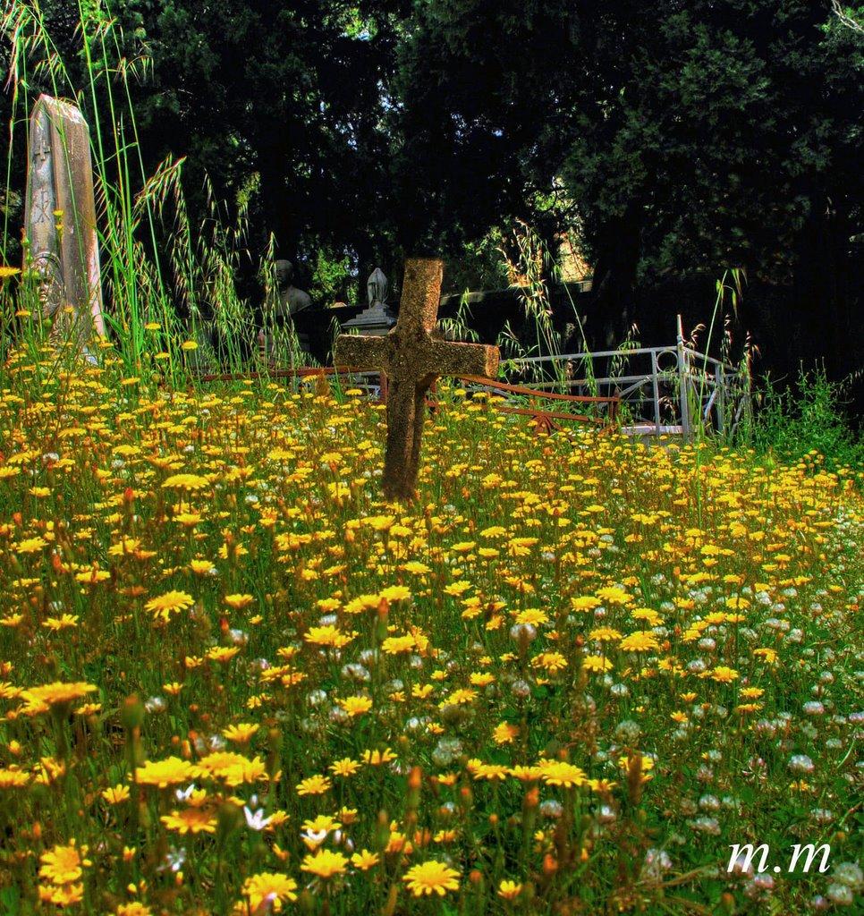 #15 - Una croce in un mare di fiori, Мессина