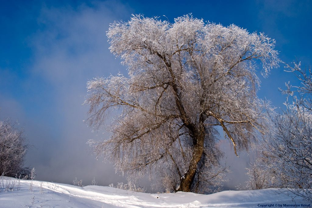 Magic tree on river border (-30C), Усть-Каменогорск
