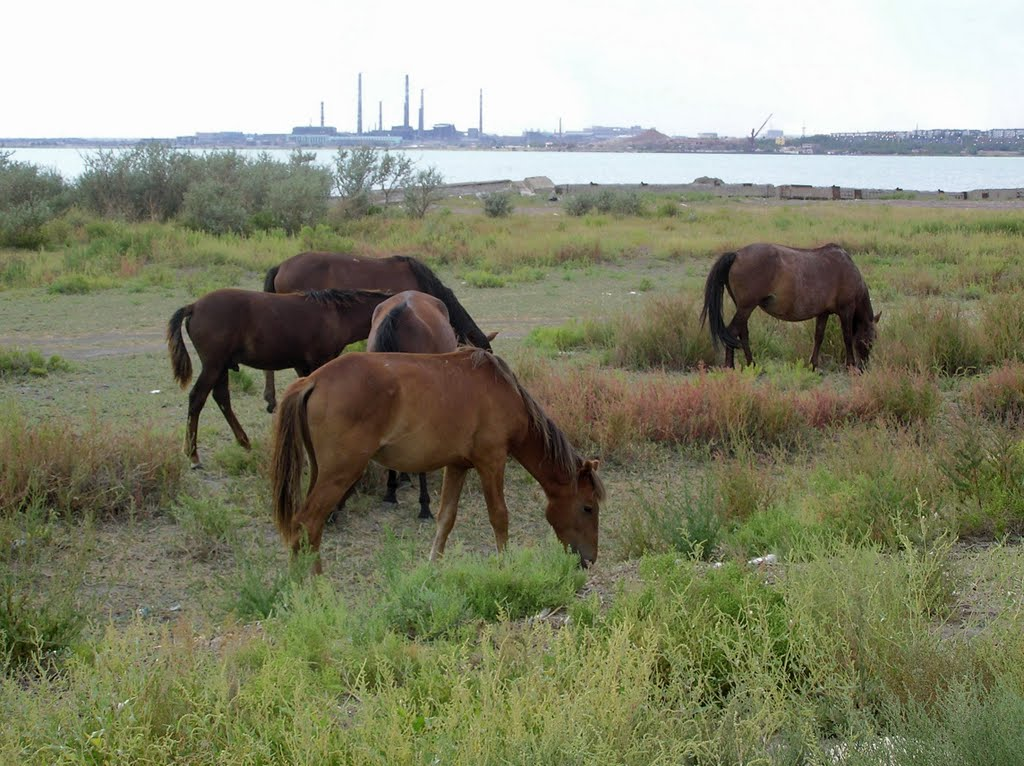 Horses with Lake Balkhash and Industry in the Backgound, Балхаш