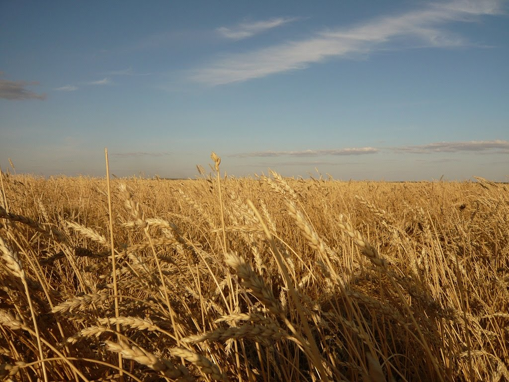 Поле, недалеко от Красиловки | Field near Krassilovka, Айдабул