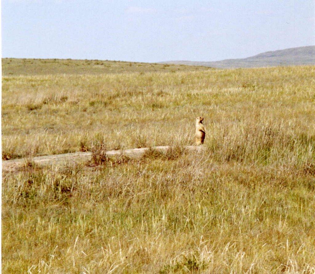 terekty: steppe., Бельагаш