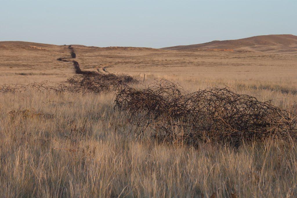 юго-западная граница Опытного поля //Experimental Field Sought-West border, Семипалатинск