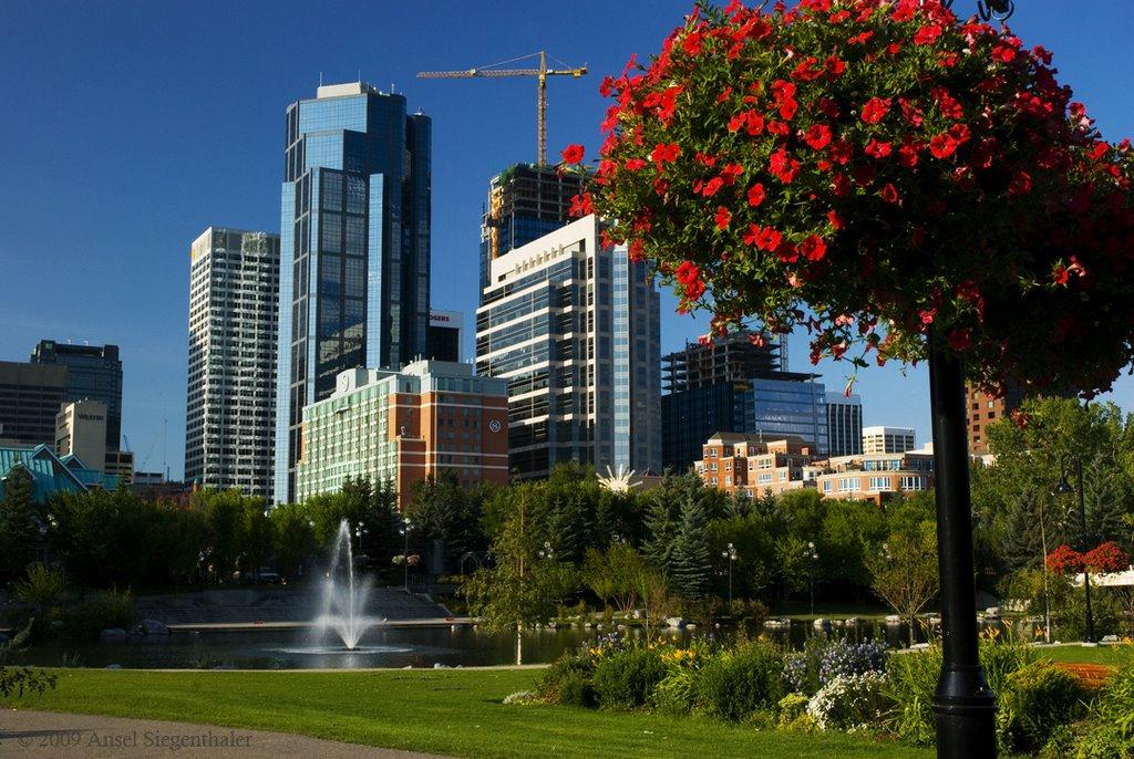 A flowers life in Calgary, Калгари