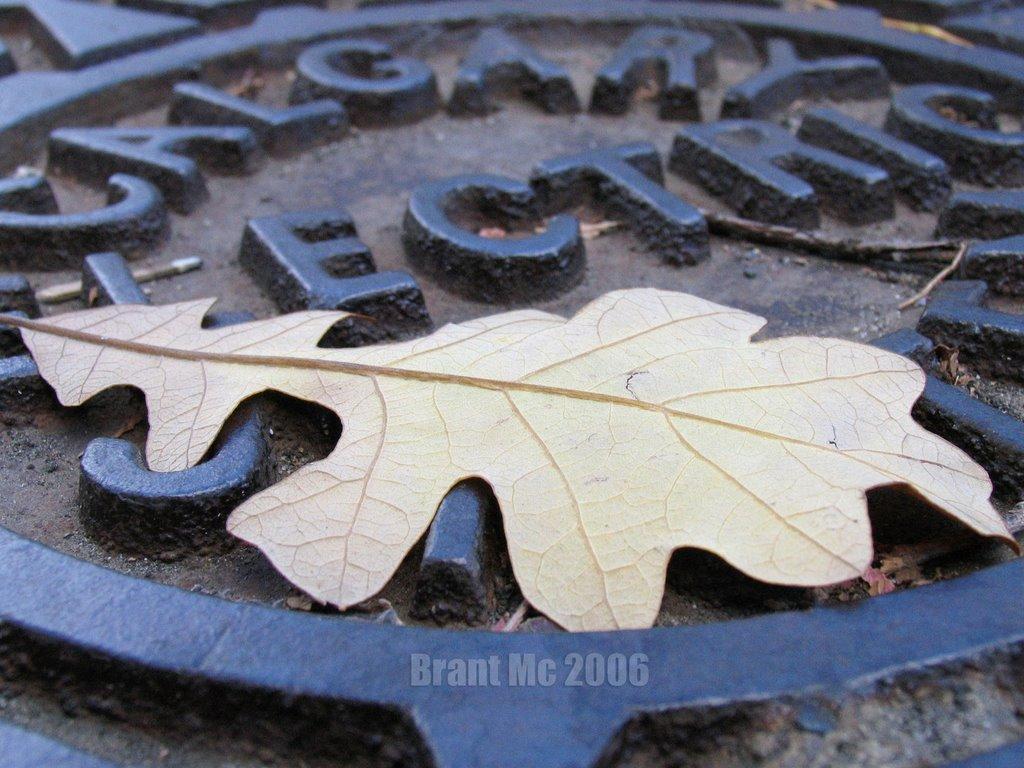 Manhole Cover, Калгари