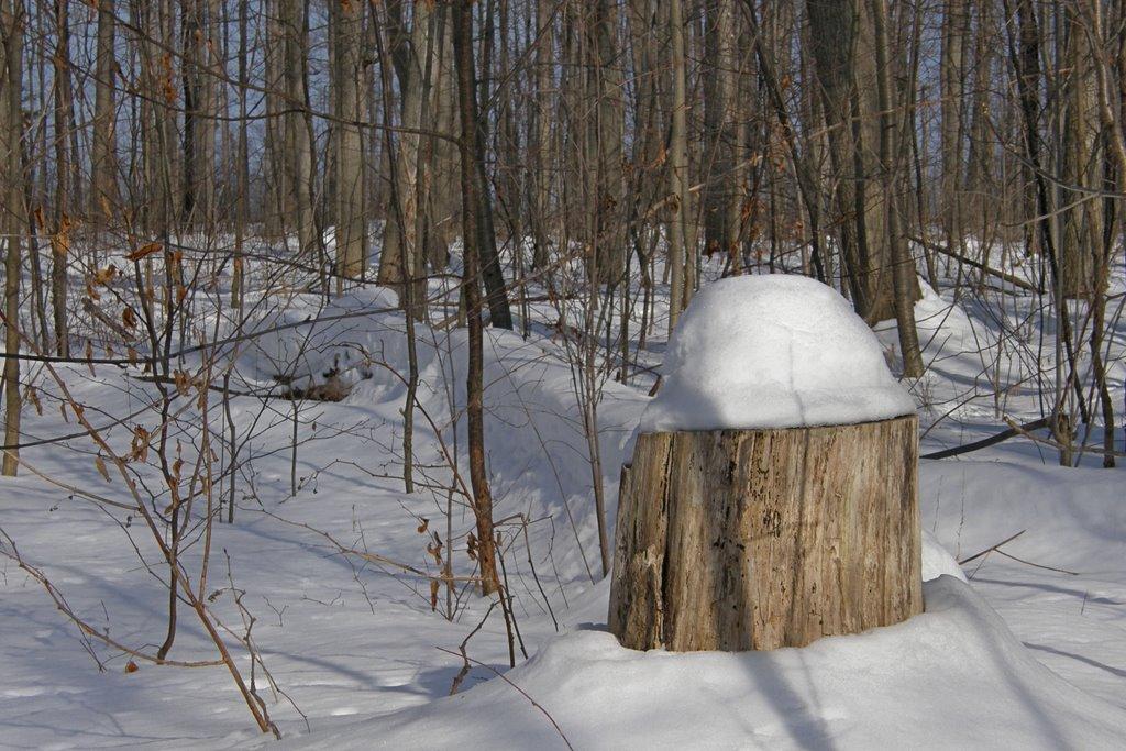 Snow-capped, Гримсби